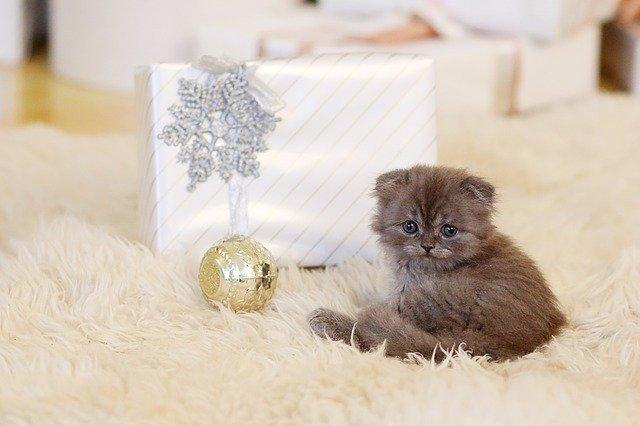 Gattini che rimangono piccoli